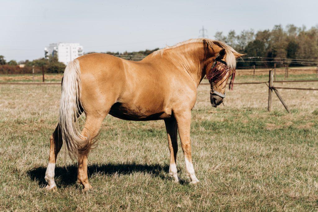 cheval fourbu Vétérinaire Homéopathe Alpes Maritimes 06